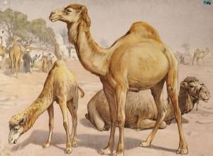 Egypupu teve