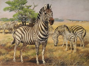 Zebra másolata